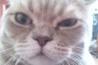 У Росії мешканці викликали ОМОН через занадто наполегливого кота