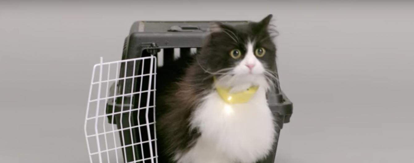 У США коти заговорили англійською: вчені розробили вигадливий гаджет
