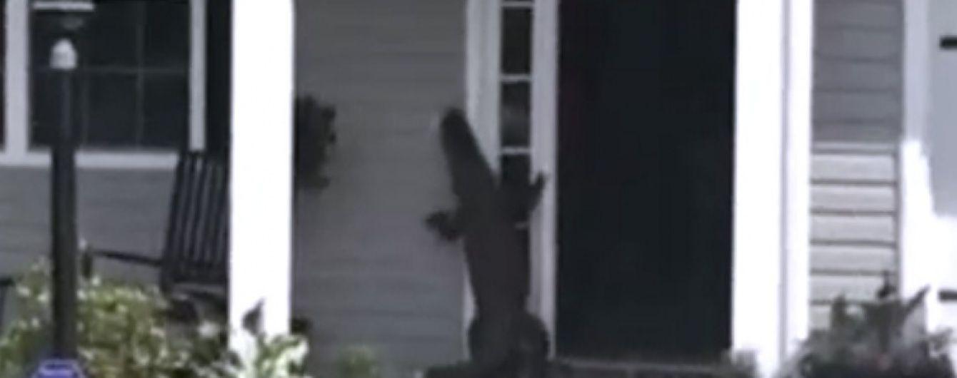 В Америці нахабний алігатор постукав у двері будинку