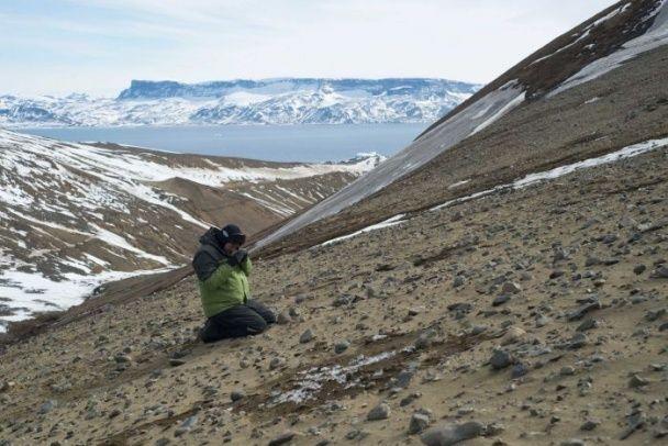 В Антарктиді знайшли скам'янілості динозаврів віком 71 мільйон років