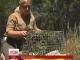 Дивовижна історія одужання коал