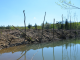 Чиновники-нафтовики завдали серйозної шкоди екології Івано-Франківщині