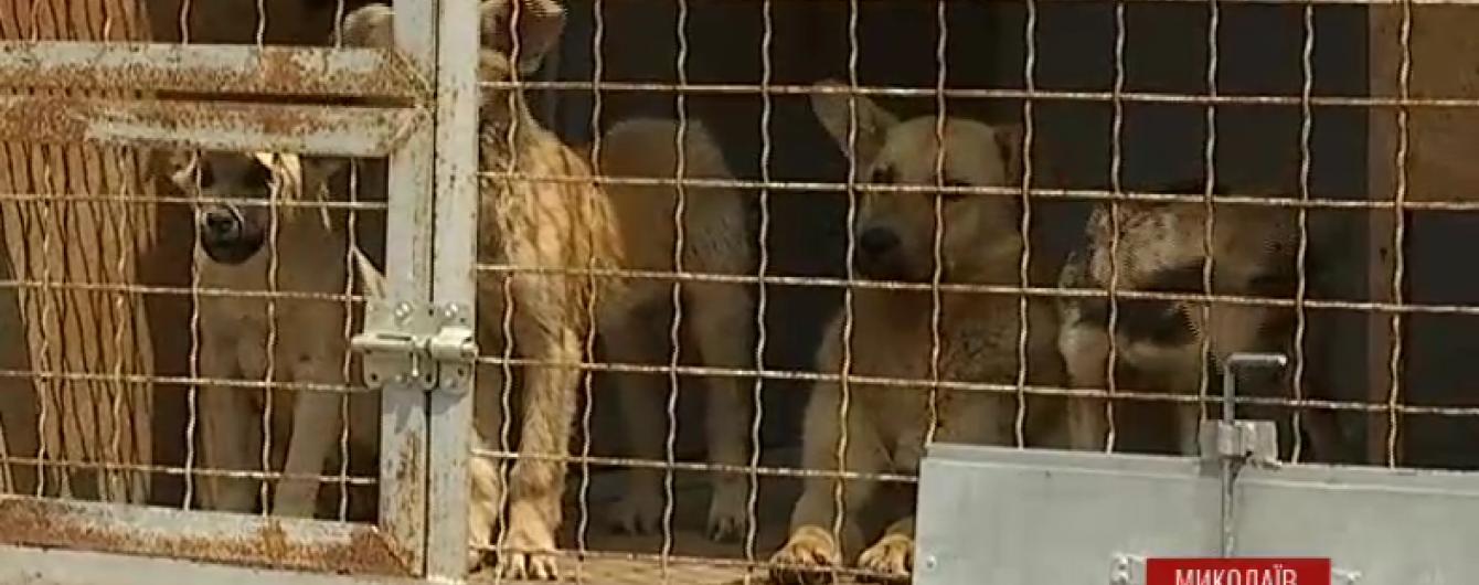 У Миколаєві зграя собак залишила жінку без руки