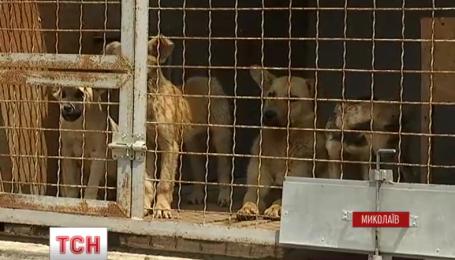 В Николаеве стая собак едва не загрызла насмерть 53-летнюю женщину