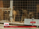 У Миколаєві зграя собак ледь не загризла на смерть 53-річну жінку