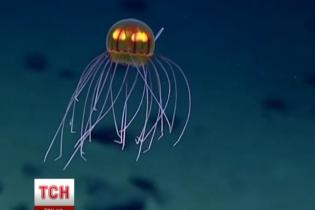 Вчені виявили в океані барвистих медуз на глибині 4 тисячі метрів