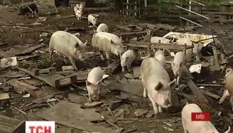 За что в столице штрафуют владельцев фермы