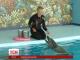 Дельфіни, котрі зникли на Вінниччині, знайшлися у Трускавці на Львівщині
