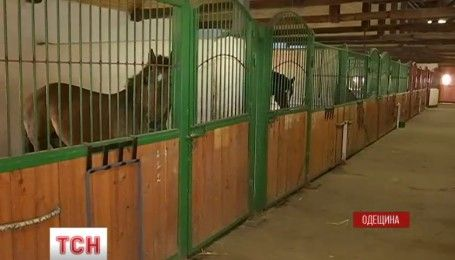 На Одещині живуть коні, врятовані від бойні