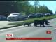 Ведмедиця з ведмежатами зупинили рух на американському хайвеї