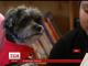 У США мігрантів намагаються навчати, використовуючи собак