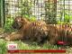 У Харківському зоопарку народилося 4 тигреняти