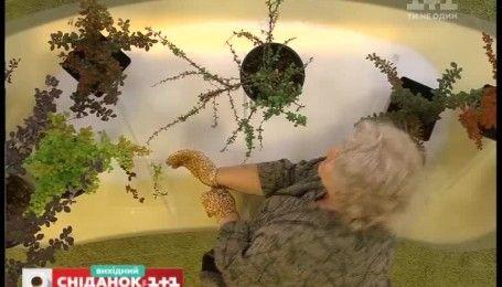 Как украсить сад с помощью декоративного барбариса