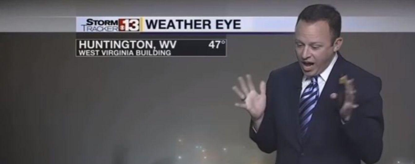 Американський ведучий погоди заверещав у прямому ефірі через павука