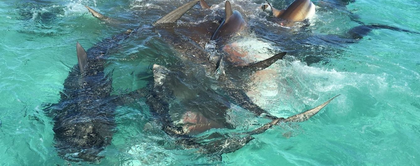 Туристична фірма зняла на відео напад 70 акул на одного кита