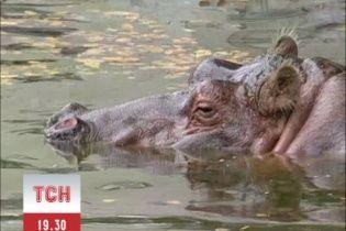 У Київському зоопарку померла найстаріша бегемотиха планети