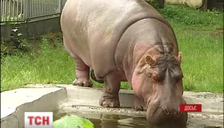 У столичному зоопарку померла найстаріша бегемотиха світу