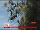 Спосіб позбутись нашестя кажанів шукають у австралійському штаті