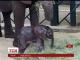 У Даллаському зоопарку народилося слоненя, мати якого врятували від засухи