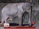 Помер найстаріший слон світу