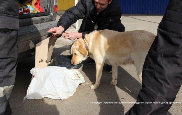Лабрадори, спаніелі та німецькі вівчарки: прикордонники показили чотирилапих охоронців кордону