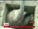 На Шрі-Ланці врятували маленьке слоненя, що застрягло у зливному стоці
