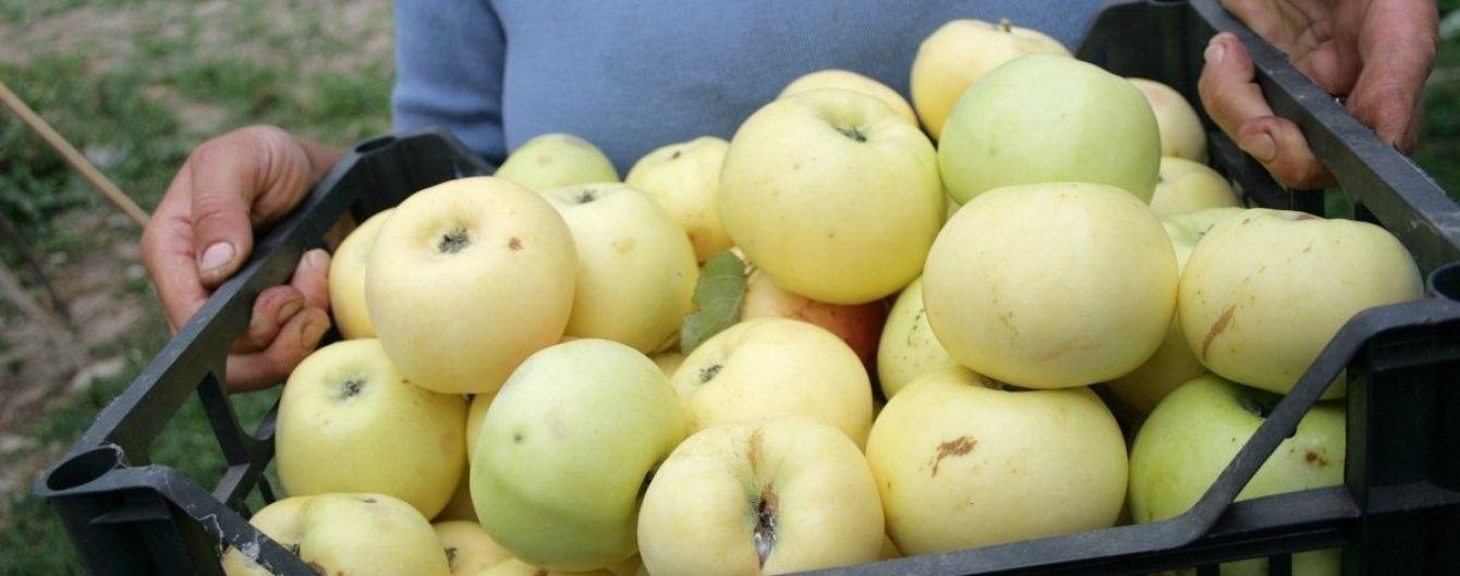 Експерти розповіли, чому обвалилися ціни на вітчизняні яблука