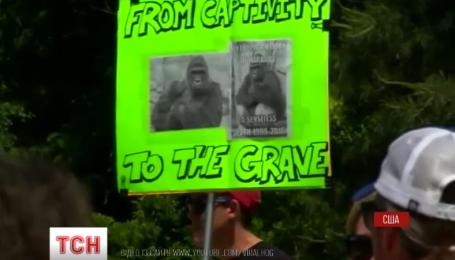Убийство гориллы в зоопарке американского города Цинциннати разделило США