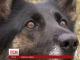 На які подвиги здатні службові собаки