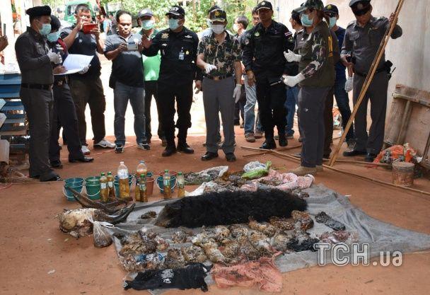 У морозилці буддійського храму знайшли 40 мертвих тигренят
