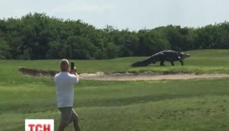Во Флориде гигантский аллигатор выполз на поле для гольфа