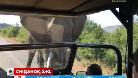 Арнольд Шварценеггер один на один встретился со слоном