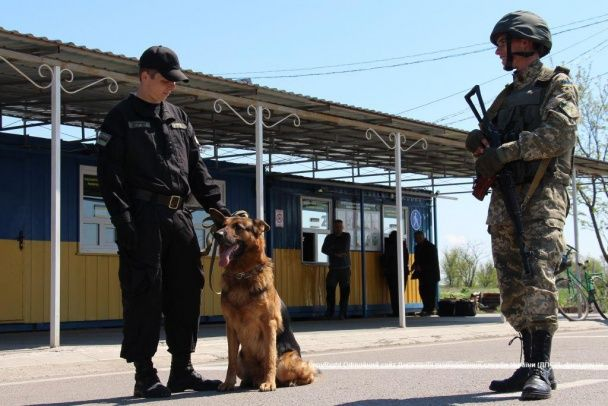 Лабрадоры, спаниели и немецкие овчарки: пограничники показили четвероногих охранников границы