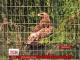На Прикарпатті у Галицькому національному парку з'являться рідкісні птахи