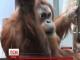 В зоопарку міста Штутгарт з'явилася служба відеопобачень для мавп