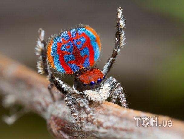 Найяскравіші фото дня: новий вид павуків в Австралії, нове графіті від Бенксі