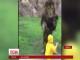У японському зоопарку лев спробував напасти на відвідувача
