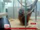 У звіринцеві міста Штутгарт з'явилася служба відеопобачень для мавпочок
