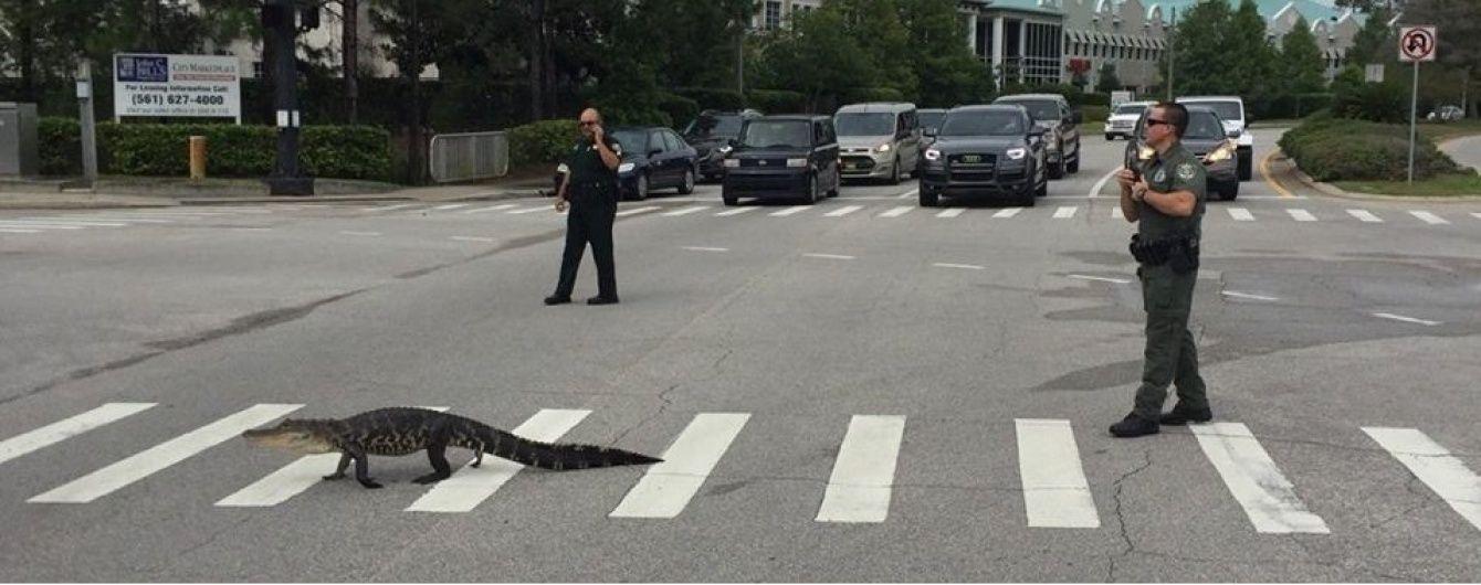 У Флориді алігатор перейшов дорогу на пішохідному переході