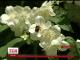 У Львівській області чоловік загинув від укусів бджіл