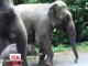 Новонароджений слоник із Сінгапурського зоопарку став зіркою Інтернету