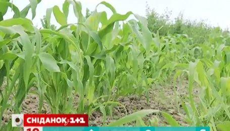 Испортит ли урожай дождливое лето