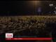 В Іспанії кілька тисяч овець втекли від пастуха