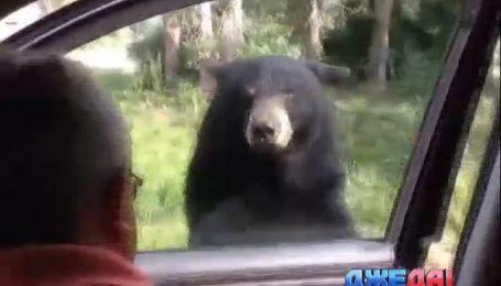 Международный обзор. Как медведь напугал туристов