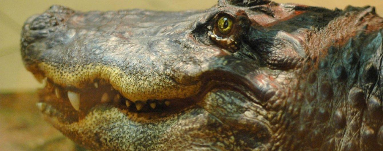 У Австралії хлопець заради дівчини стрибнув у річку з крокодилами та ледь не втратив руку