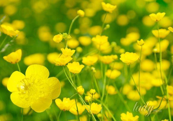 трава, борщевик, цветы, луг_1