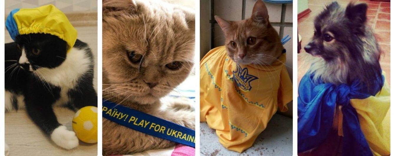 Гав, няв і футбол. Як домашні улюбленці вболівають за збірну України