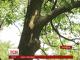 Поховали хлопчика, ураженого блискавкою на Харківщині