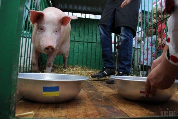 Найяскравіші фото дня: масова йога в Індії, свиня, яка не вгадала результат матчу з Україною