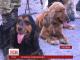У Херсоні собаки-прикордонники підтверджували свою кваліфікацію